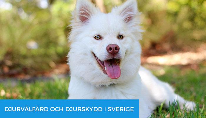 Djurvälfärd-och-djurskydd-i-Sverige