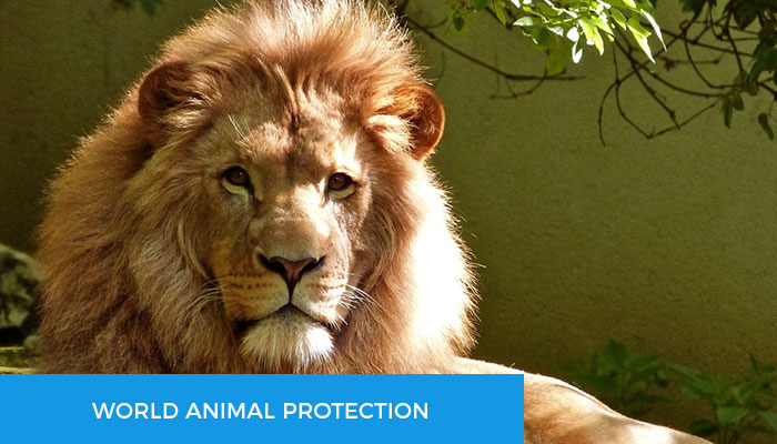 World-Animal-Protection